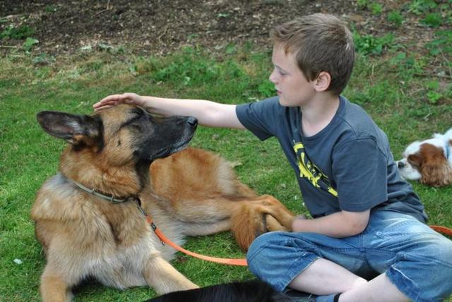 Закон о содержании собак в российской федерации